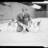 Hardie Hilbright and dogs, Southern California, 1934