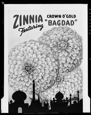 Black & white & kodachrome copies of flowers, Southern California, 1940