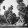 Palm Canyon for El Mirador Hotel, Palm Springs, CA, 1937