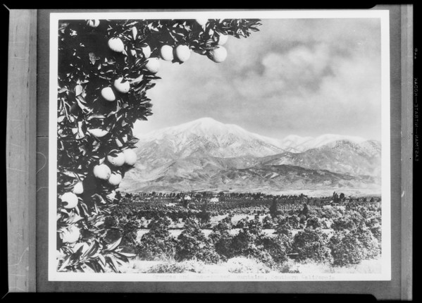 Snow & orange grove, Southern California, 1931