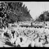 Turkeys, orange grove, etc. for enlargement, Southern California, 1940