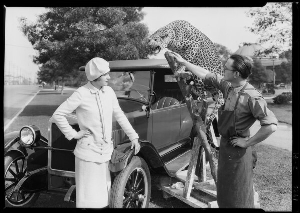 Chevrolet & stuffed leopard, Southern California, 1926