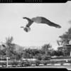 Dorothy Poynton diving, Southern California, 1940