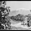 Copies of composites, Pomona Pump Co., Southern California, 1930