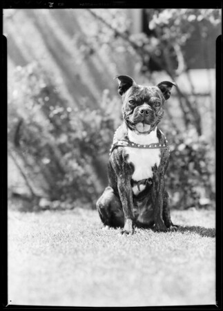 Buster, Southern California, 1931