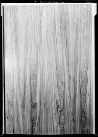 Panel of wood showing grain, Southern California, 1926