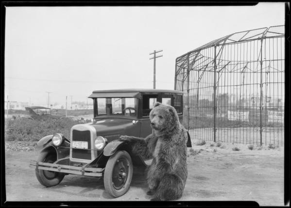 Chevrolet at Al Barnes Zoo, Culver City, CA, 1926