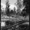 La Brea Pits, Los Angeles, CA, 1932