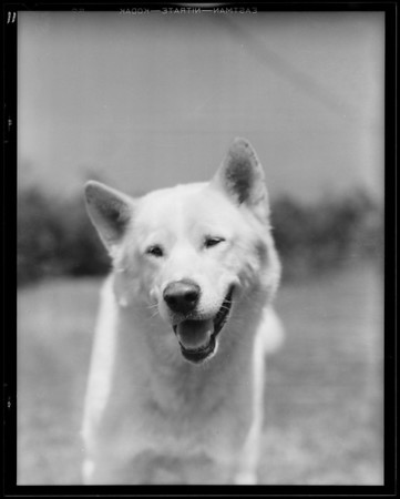 Dog at Alta Canyada, J.V. Barnes owner, 4608 Alta Canyada Road, La Cañada Flintridge, CA, 1931