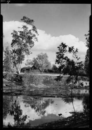 La Brea Pits, Los Angeles, CA, 1932