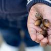 acorn - どんぐり