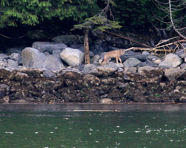 Coastal Wolf Fishing