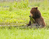 Bears insist on a well balanced diet which includes salad.