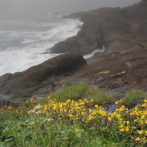 Oregon Coast with Yellow Flowers