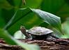 BC-109 Turtle