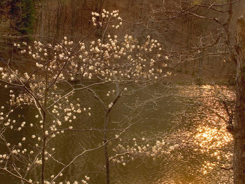 BC-307 Strahl Lake in Spring