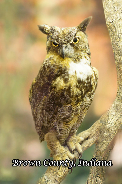 BC-104 Great Horned Owl