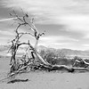 Tree at Death Valley