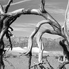 Dunes with Tree