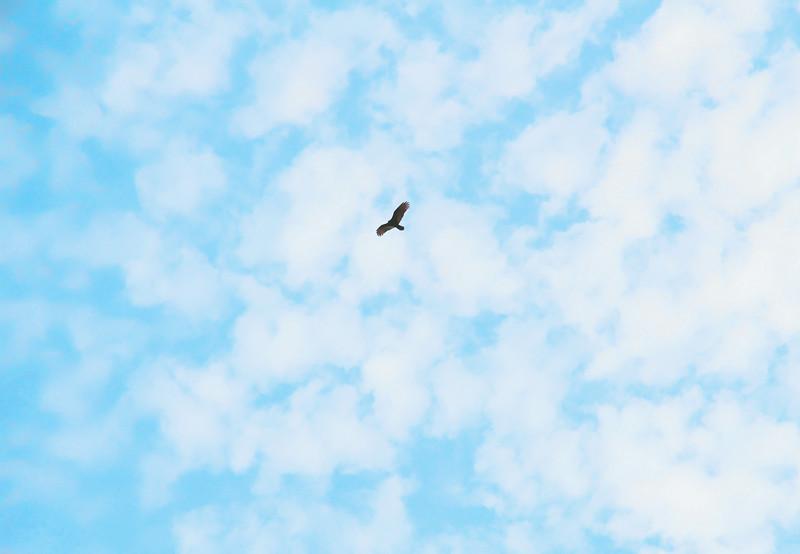 Wi. Sky Soar