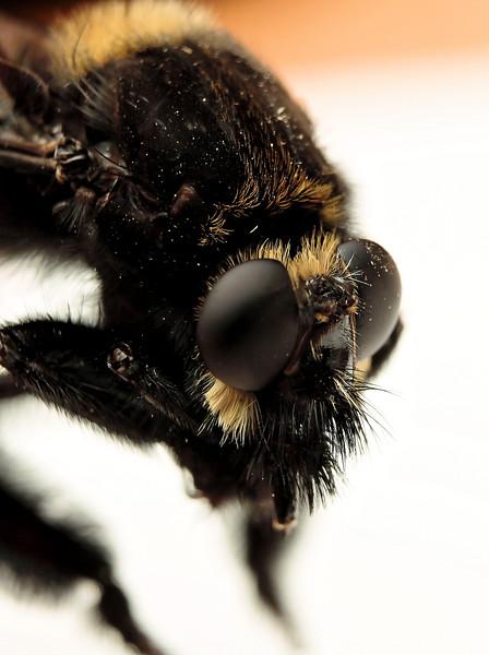 Wi. Bug 3