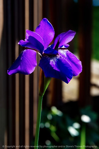 015-flower_iris-ankeny-05jun20-08x12-008-400-6984