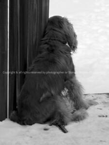 042-dog_mo-ankeny-03feb13-09x12-001bw-0555