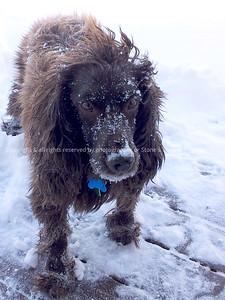 042-dog_storm-ankeny-22dec13-09x12-001-1245