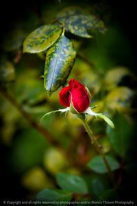 015-rose-ankeny-27aug17-08x12-007-0961