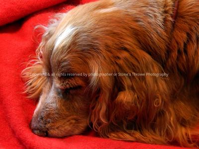 042-dog_mo-ankeny-03feb13-12x09-002-0512