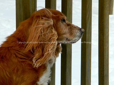 042-dog_mo-ankeny-03feb13-12x09-002-0558