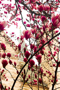 Courtyard Blooms