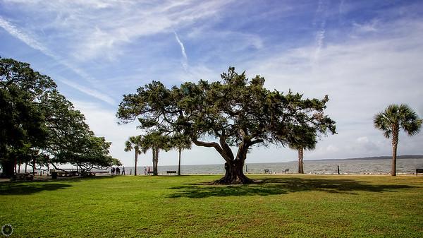 Saint Simons Tree