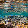 Coral Reef Reflections