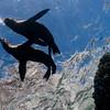 Sea Lions, Los Islotes, MX