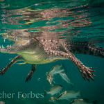 FletcherForbes' photo