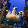 Duane Wreck, Florida Keys