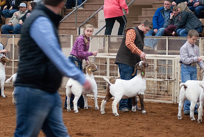20190104_wilburton_goats_showmanship-and-does031