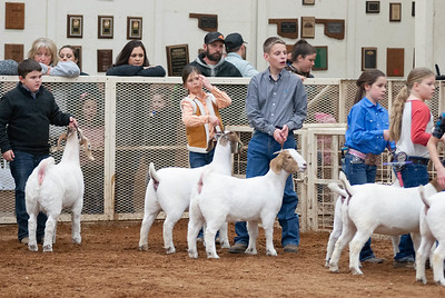 20190104_wilburton_goats_showmanship-and-does034