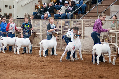 20190104_wilburton_goats_showmanship-and-does032