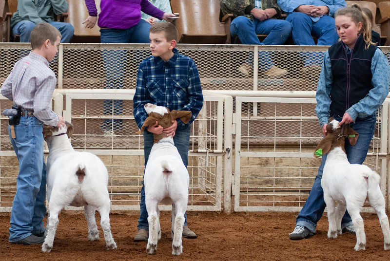 20190104_wilburton_goats_showmanship-and-does029