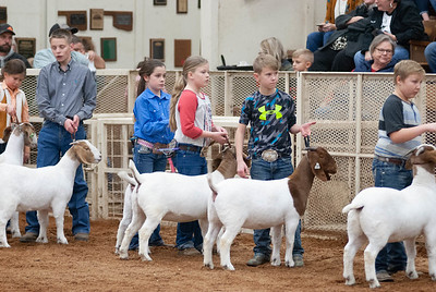 20190104_wilburton_goats_showmanship-and-does033