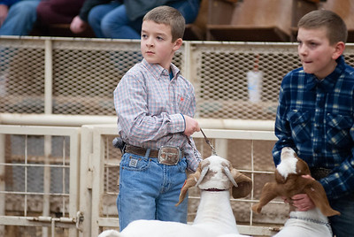 20190104_wilburton_goats_showmanship-and-does030