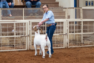 20190104_wilburton_goats_showmanship-and-does027