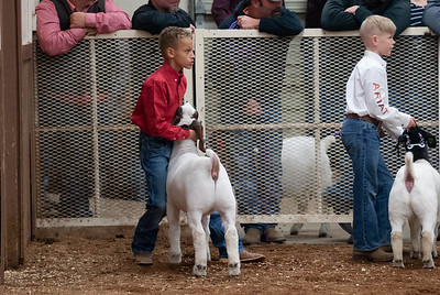 20190104_wilburton_goats_showmanship-and-does039