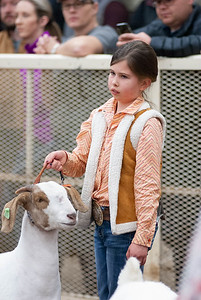 20190104_wilburton_goats_showmanship-and-does042