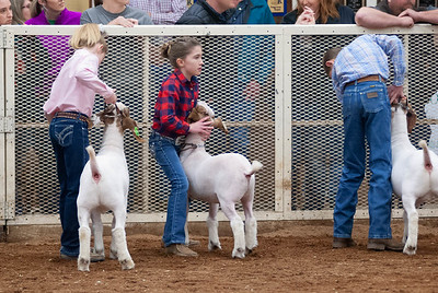 20190104_wilburton_goats_showmanship-and-does037