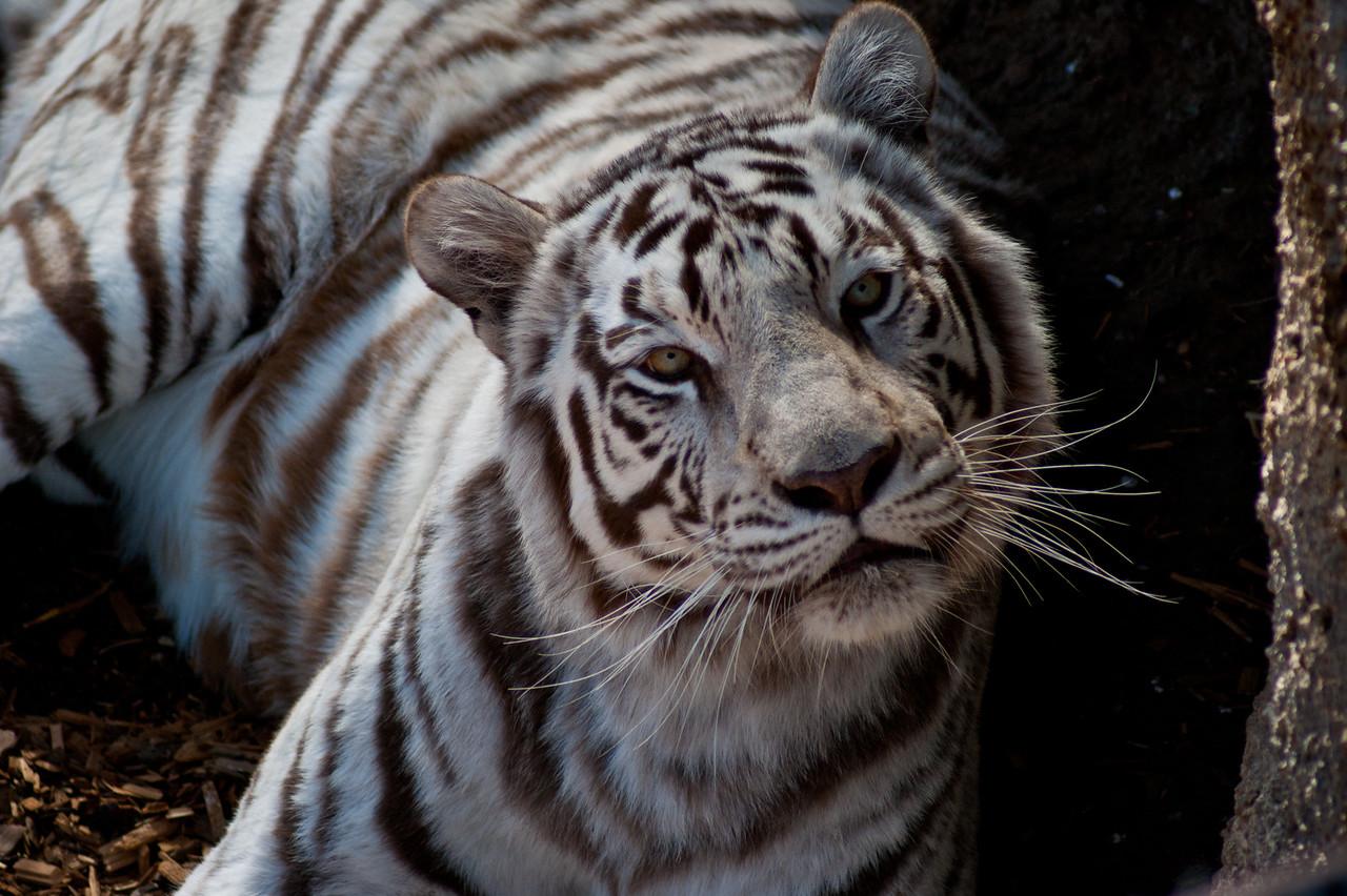 Day 308/365 - Wildlife Sanctuary