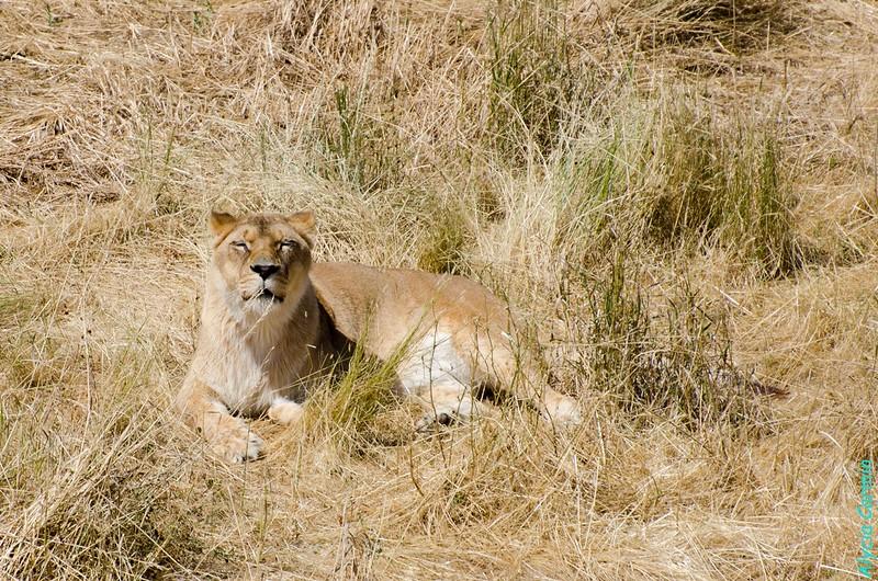 Wildlife Animal Sanctuary, Hudson CO