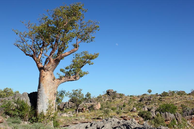 Winjana Gorge region, Kimberley